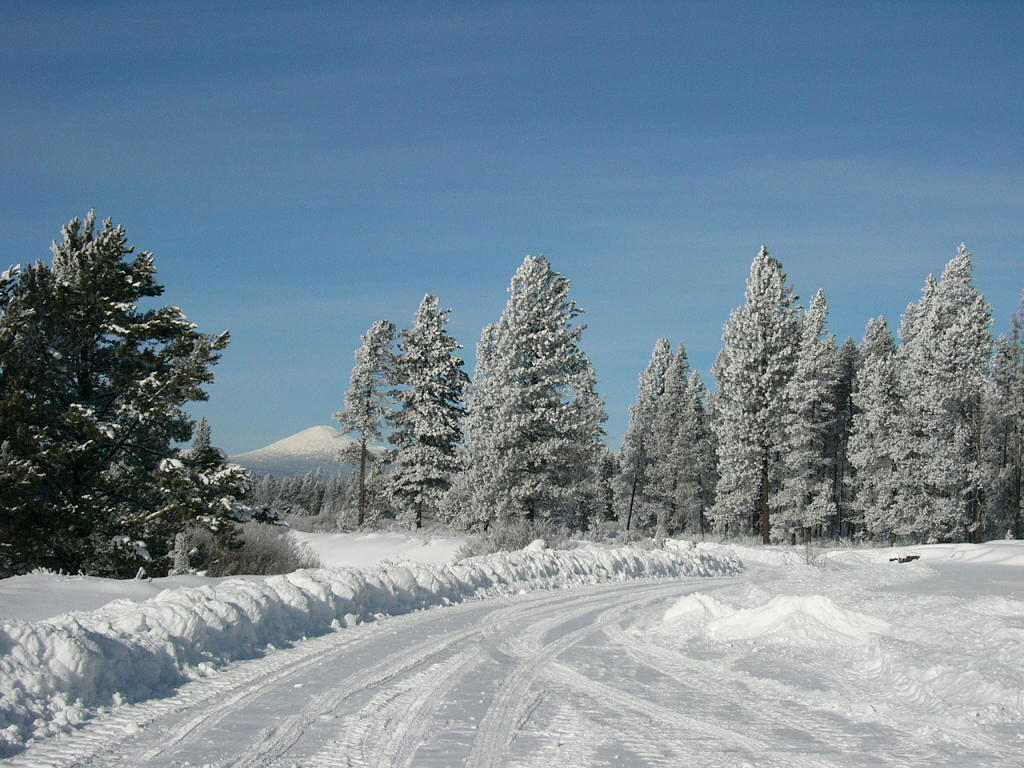 sun on snow with trees and mountain in background